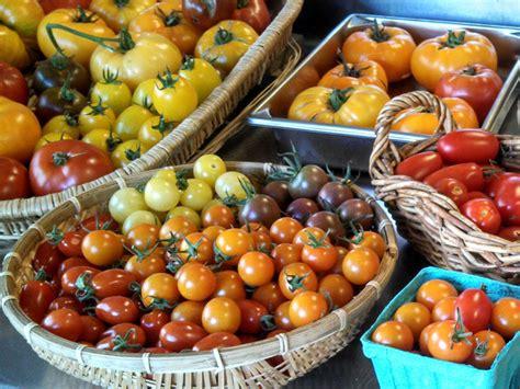 Die Besten Tomaten 3955 fette beute tipps f 252 r eine richtig dicke tomatenernte