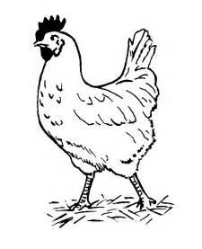 chicken coloring pages chicken coloring pages coloringpages1001