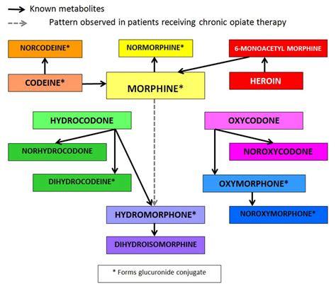 opioid metabolism flowchart medical pinterest