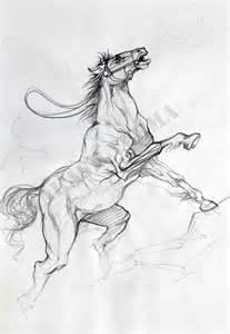sketch online free free horse sketch portfolio