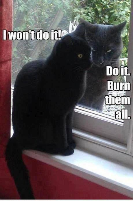 Funny Black Cat Memes - do it meme slapcaption com black cat memes