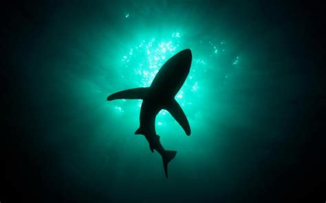 Shadow In The Sea wallpaper shark shadow in the sea my hd wallpapers