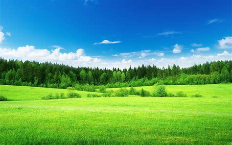 green landscape 6942 2560 x 1600 wallpaperlayer com