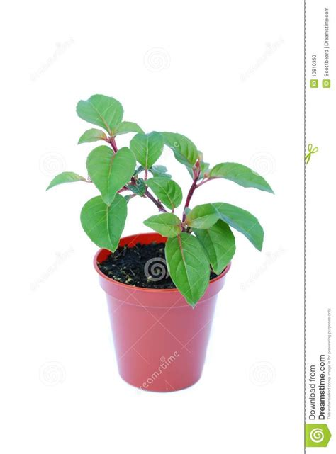tiny plants small potted plant isolated on white stock photo image