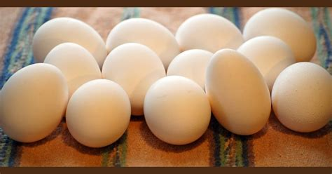 Cooked Eggs Shelf by Dehydrating Way Beyond Egg Storage Chart