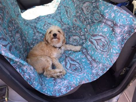 hammock for dogs 1000 ideas about dog hammock on pinterest dog car seat