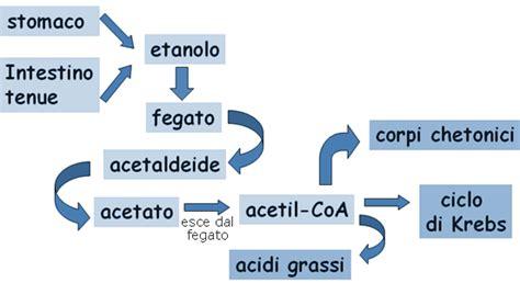 Alcol: Assorbimento e Metabolismo   Come viene Smaltito