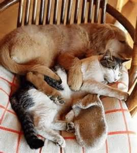 how to a cat and to get along 17 best images about cats and dogs on what is this cats and pets