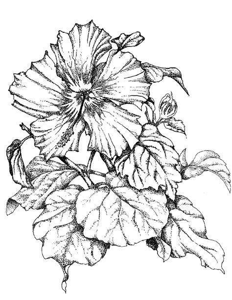 Sketches Flowers by Drawing Of A Flower Clipart Best