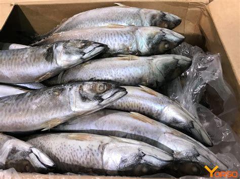 mackerel wr    kg atlantic  mauritrader sarl