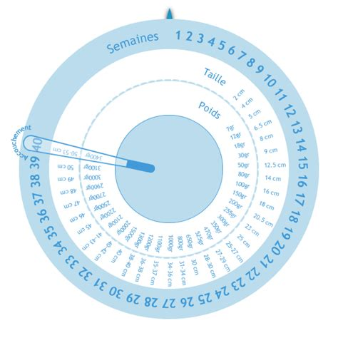 Calendã Gestacional Semanas X Meses Echelle De D 233 Veloppement Du B 233 B 233 Calculatrices