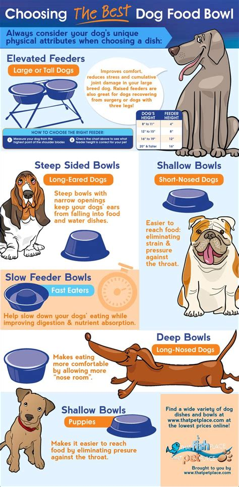 dog wont eat out of bowl your dogs food bowl could be causing your dog health