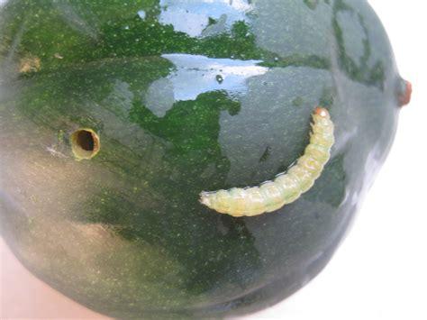 The Conqueror Worm Worms In Vegetable Garden
