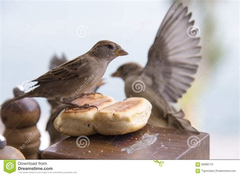 birds and bread