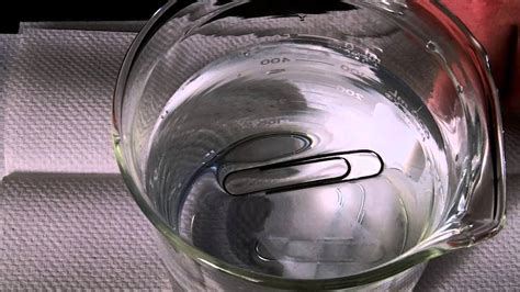 How To Make A Paper Clip Float - plainfield chemistry surface tension and a floating