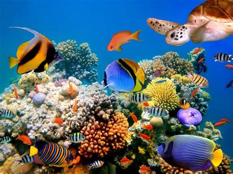 pensum imagenes medicas ucsd biolog 237 a marina hidrobiolog 237 a marina
