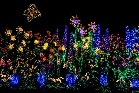 christmas lights bellevue botanical gardens little