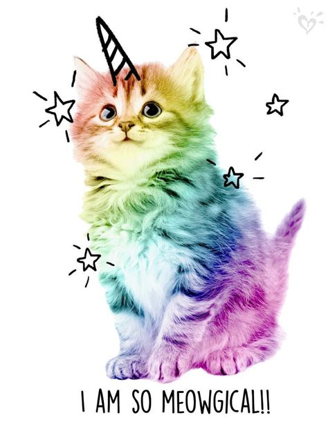 Cat Rainbow Meme - uni cats are spellbinding quotes funny memes quotes