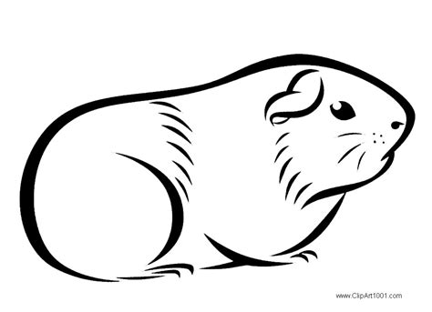 guinea pig coloring pages guinea pig coloring pages drawings free printable