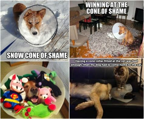 Cone Of Shame Meme - it s all fun games until someone ends up in a cone