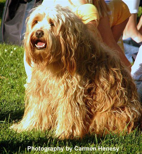 shaggy dogs s chronicles shaggy june 18 2011