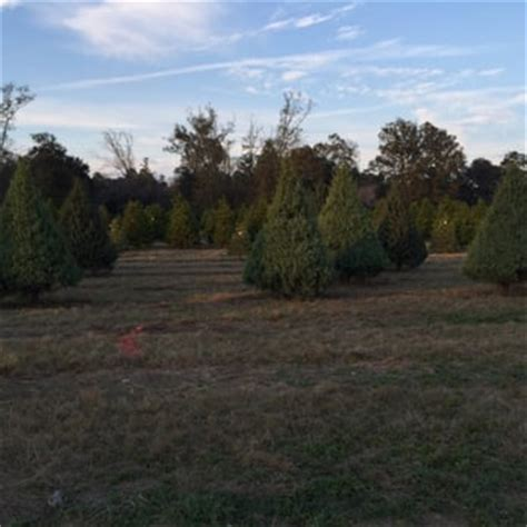shady pond tree farm nurseries gardening 37226 pine