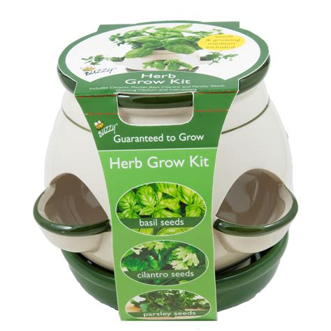 indoor herb garden kit lowes shop buzzy herb gardening kit at lowes com
