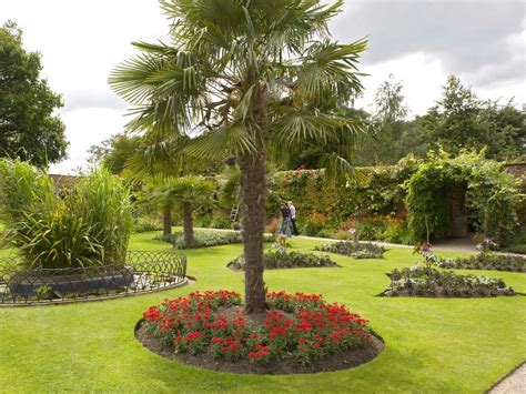 types of garden trees desktop background of palm at chalke gardens
