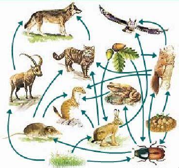 cadenas troficas del paramo sinecolog 237 a ciencia y biolog 237 a