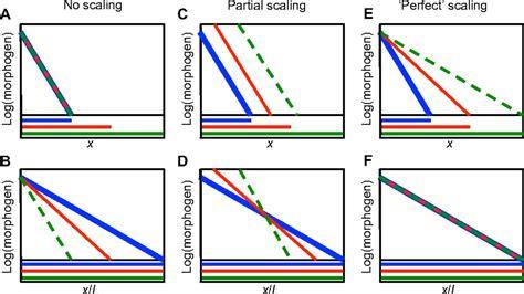 pattern formation mechanisms mechanisms of scaling in pattern formation development