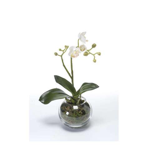 phalaenopsis orchidee artificielle en pot verre 29 cm compositions artificielles