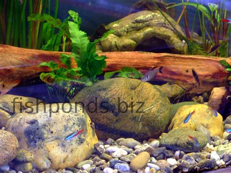 Aquascaping With Rocks by Aquascaping With River Rocks