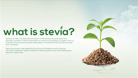 what is what is stevia
