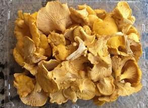 image gallery mushrooms types