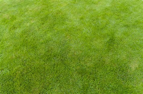 pattern nature grass green grass pattern pictures free textures and free photos