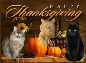 happy thanksgiving cats happy thanksgiving the island cats every cat wants to