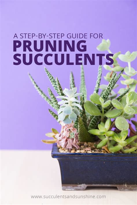 pruning and maintaining a succulent arrangement