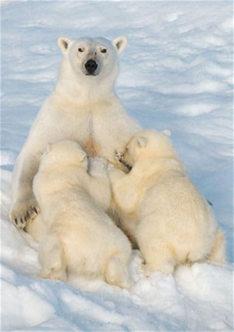 imagenes de animales que hibernan im 225 genes de animales y paisajes de todo el mundo en