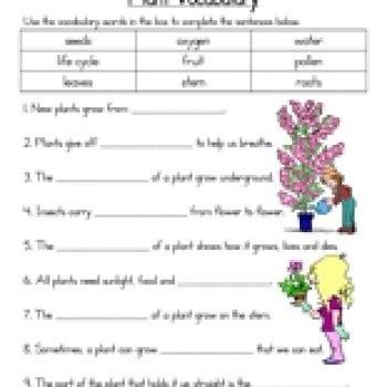 plant vocabulary worksheet have fun teaching