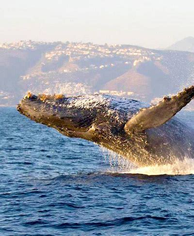 newport boat tours whale watching cruises boat tours newport legacy cruises