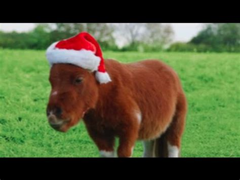 amazon commercial actress with horse amazon prime little horse christmas edition little