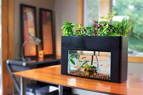 indoor aquaponics kits  grow vegetables fish
