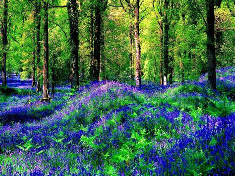 fiori in estate fiori in estate foresta hd sfondo desktop a grande