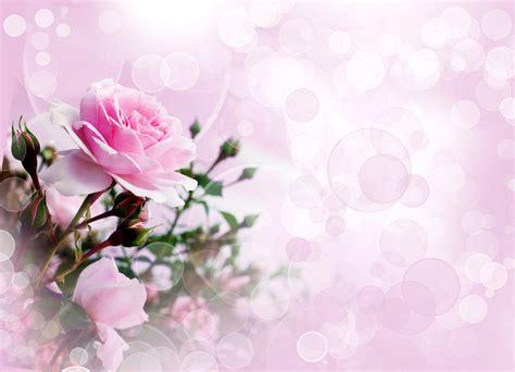 imagenes flores de otoño fondos de pantalla 4220x3045 rosas en gran plano rosa
