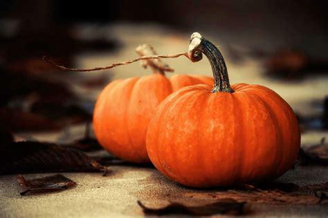 pumpkin of autumn orange food delight why orange food is the best