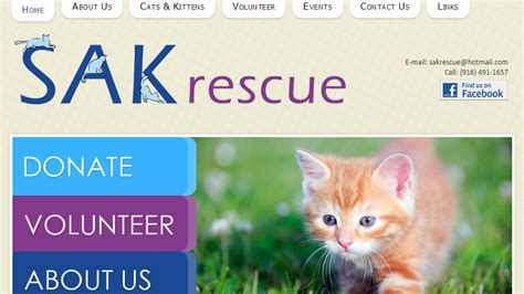 shelters in sacramento best pet rescue shelters in sacramento 171 cbs sacramento