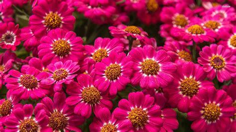 flower wallpaper download for mobile desktop for wallpaper hd flowers adorable flower mobile
