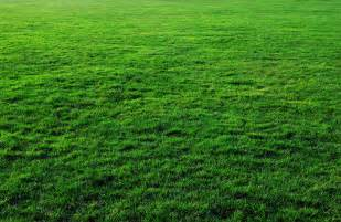 seven free grass textures or lawn background images www