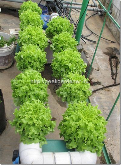 gardening hydroponics learn the amazing of growing fruits books best 20 hydroponic lettuce ideas on diy