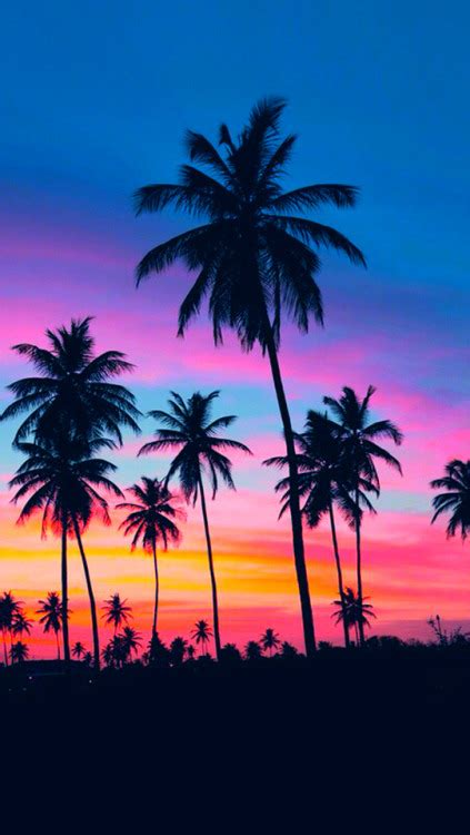 palm trees background palm trees iphone wallpapers